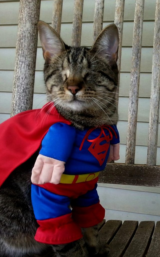 Pebbles the Blind Cat In a Superhero Halloween Costume - But she just really wants the treats